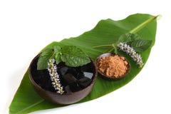 Trawy galareta, warzywo galareta, czarna w kolorze, jedzącym z cukierem (Mesona chinensis) Obraz Stock