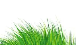 Trawy granica, Prosta łąkowa trawa, dziki gazon również zwrócić corel ilustracji wektora ilustracja wektor