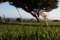 trawy groundlevel pozioma widok Obrazy Stock
