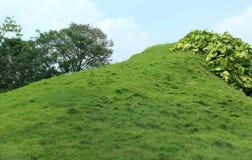 Trawy gruntowa łąka Obraz Royalty Free