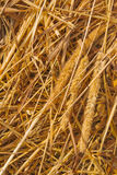 trawy haystack badyle Zdjęcia Royalty Free