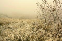 Trawy hoar frosted Zdjęcie Stock