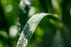 Trawy i deszczu krople Zdjęcie Stock