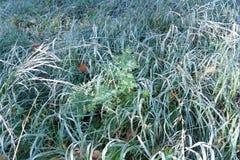 Trawy i liście Fotografia Stock