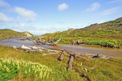Trawy i strumień przez piasek diun Obrazy Stock