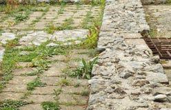 Trawy i ziele dorośnięcie między brukowami Obrazy Stock