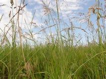 Trawy i ziele tło Fotografia Royalty Free