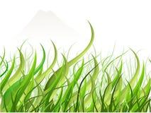 trawy Japan widok Zdjęcia Stock