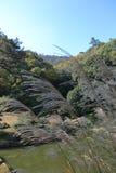 trawy japończyka pampasy Zdjęcie Royalty Free