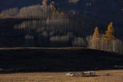 Trawy jesień Zdjęcia Royalty Free