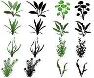 trawy jeziorna rośliien woda ilustracja wektor