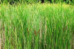 trawy jeziorna rośliien woda Fotografia Stock