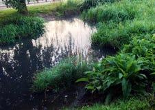 trawy jeziorna rośliien woda Zdjęcia Stock