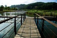 trawy jezioro Obrazy Royalty Free