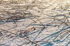 Trawy klejenie z zamarzniętego lodu jezioro Obraz Stock