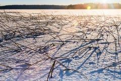 Trawy klejenie z zamarzniętego lodu jezioro Obrazy Stock