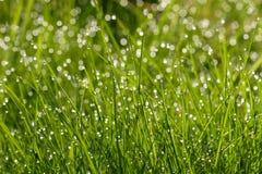 trawy kropel wody Zdjęcia Royalty Free
