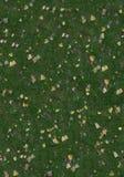 trawy liść tekstura obrazy stock