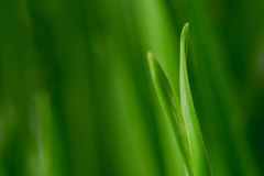 trawy macro obrazy royalty free
