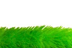 trawy miękka część Zdjęcia Stock