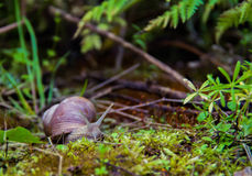 trawy natury rosyjski ślimaczka pustkowia świat fotografia stock
