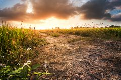 Trawy nieba i kwiatów zmierzch Obrazy Royalty Free