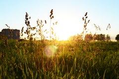 Trawy nieba zmierzchu miasta pola faucet kształtuje teren lasową chmury greenery spokoju calmness pinkinu naturę Zdjęcie Royalty Free