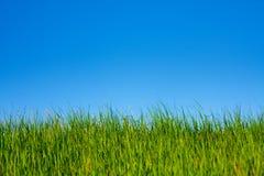 trawy niebo zdjęcia royalty free