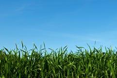 trawy niebo Obrazy Stock
