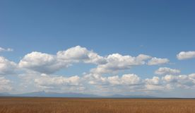 Trawy niebo i pole Zdjęcie Royalty Free