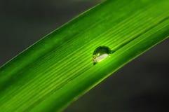 trawy opadowa woda zdjęcia stock