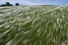 trawy piórkowa rzeka Zdjęcia Stock