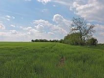 Trawy pola krajobraz Zdjęcia Stock