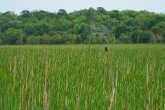 Trawy pola tło Zdjęcie Royalty Free