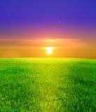 trawy pola zielone fotografia royalty free