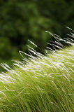 Trawy pole Obrazy Royalty Free