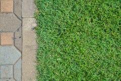 Trawy pole i blick podłoga zdjęcia royalty free