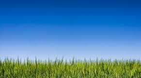 Trawy pole pod jasnym niebieskim niebem Obrazy Stock