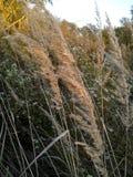 Trawy pole w jesieni Zdjęcie Stock