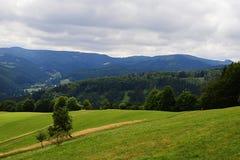 Trawy pole z śródpolną drogą, odludnym drzewem i lasem w tle blisko Dolni Lomna w republika czech podczas chmurnego późnego lata  fotografia stock