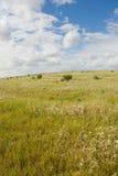 Trawy pole z chmurami zasięrzutnymi zdjęcie stock