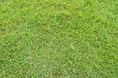 Trawy powierzchnia Obraz Stock