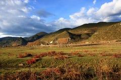 trawy prerii czerwień fotografia royalty free