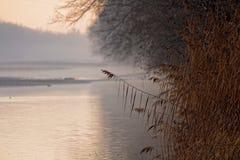 Trawy przy rzeka krajobrazem spadkiem Obrazy Stock