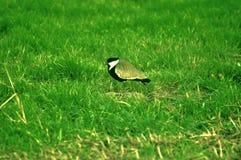 trawy ptasia pusta notatka Zdjęcia Royalty Free
