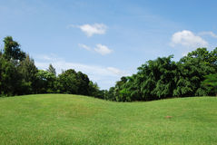 trawy śródpolny niebo Obrazy Stock