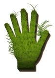 Trawy ręka Obrazy Stock