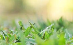 Trawy rafa na szklanej podłoga Zdjęcia Royalty Free