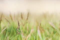 Trawy rafa na szklanej podłoga Obrazy Stock