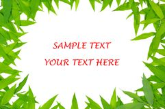 trawy ramowa zieleń Obrazy Royalty Free